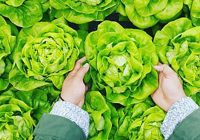 「自分で野菜を育てる」ことへの注目度が急上昇中 - GIGAZINE