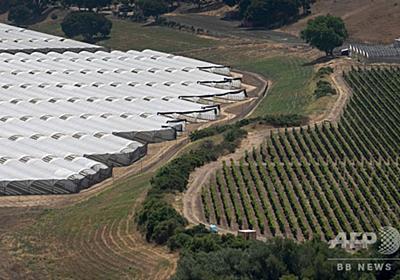 米ワイン産地で大麻栽培拡大、臭いや殺虫剤の使用で対立 写真15枚 国際ニュース:AFPBB News