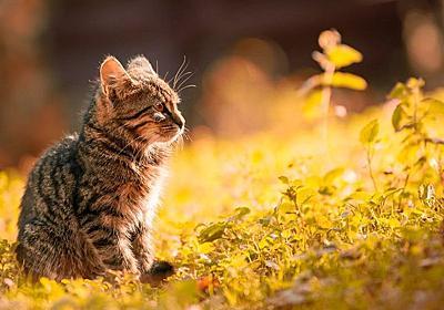 愛と風の教え。ネコと風の教え。 - ネコによる福音書