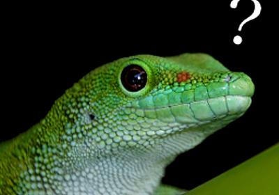 トランプ政権発足後1週間でアメリカのサイエンスに起きたこと | Gecko's Eyes