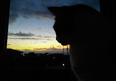 愛猫と朝を迎える。 - マルごしサン・ブログ