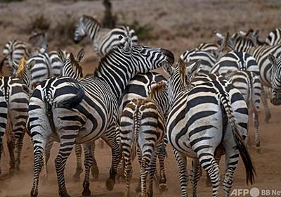 野生動物版「国勢調査」 ケニアで初実施 写真21枚 国際ニュース:AFPBB News