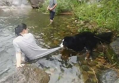 「どうしよう、犬が川遊びをさせてくれないの…」危険を察知して助けようとする:らばQ