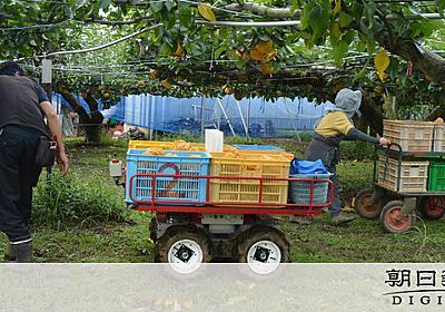 日本一の看板守れ 梨の生産現場でスマート農業 実証実験始まる:朝日新聞デジタル