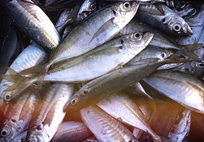 初めて淡路島で釣りをする時にオススメの釣具屋・エサ屋 厳選3店 | 淡路島を愛する紀州釣り師