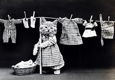 全自動洗濯機にケンカをうる老父 - ちょっと待て!同居介護と保護猫ちゃん