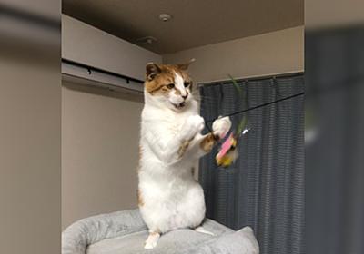 「え…なにそれ」「うちの猫の写真です」職場に猫の写真を持っていったらめちゃくちゃあったかい反応が返ってきた「間違いなくアットホームな職場」 - Togetter