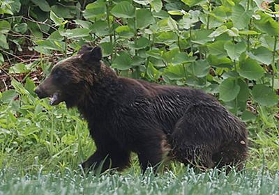 自衛隊にクマ襲来 その対応の法的根拠は何になる? 武器使用が認められるにも条件アリ | 乗りものニュース