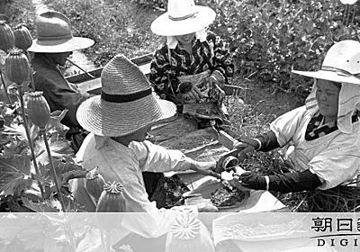 白い花、農家には隠された使途 日本が採った悪魔の戦略 [戦後75年特集]:朝日新聞デジタル