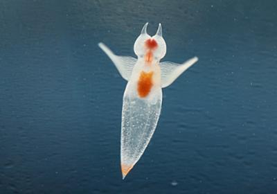 氷の妖精クリオネを育ててみよう!冷蔵庫で育てられるって知ってた? | キナリノ