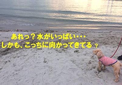 ナナちゃん、砂浜を走り、海に打ちのめされる - NANA`S ROOM