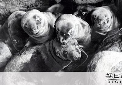 戦前の竹島アシカ猟、貴重な写真発見 朝日記者が撮影:朝日新聞デジタル