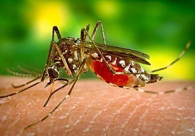 遺伝子組み換えされた蚊を野生に放ち撲滅する実験が失敗、予想外の結果に - GIGAZINE
