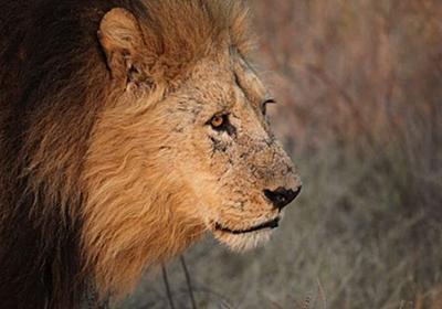 南アで密猟者がゾウに襲われて死亡、遺体もライオンに食べられ頭部しか残らず – Switch News(スウィッチ・ニュース)