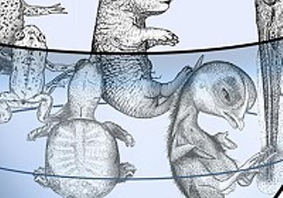 脊椎動物の基本構造が5億年以上変わらなかった理由 | 東京大学