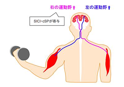 筋力を簡単にアップさせる方法~筋力と神経の関係を知っておこう - リハビリmemo