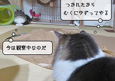 猫雑記 ~「キャッチミーイフユーキャン2」に破壊されないヒモを~ - 猫と雀と熱帯魚
