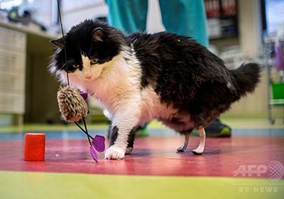 また自由に走れるニャン 両後ろ脚失った野良猫にバイオニック義肢 写真6枚 国際ニュース:AFPBB News