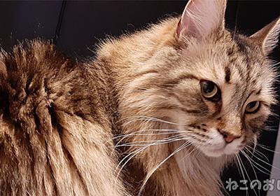 猫の腎臓病治療法が開発だって? 寿命が2倍に伸びるとかすげぇ! - ねこのおしごと