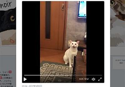 飼い主にキレまくる白ネコさんが話題 | おたくま経済新聞