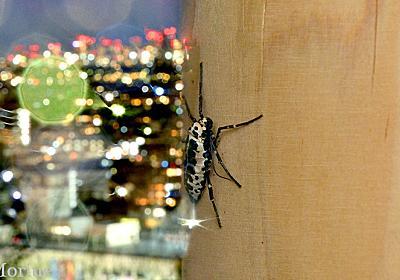 冬の蛾をかっこよく撮ろう :: デイリーポータルZ