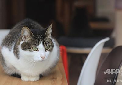 飼い猫が急に凶暴化、原因は珍しいウイルス 伊当局が注意喚起 写真1枚 国際ニュース:AFPBB News