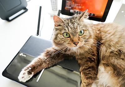 """Wi-Fiが二重ルーター状態になっているかを確認するツールは?【自宅Wi-Fiの""""わからない""""をスッキリ!】 - INTERNET Watch"""