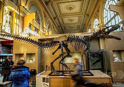 「アロサウルス」の骨格標本、1億3000万円で落札 仏競売 写真9枚 国際ニュース:AFPBB News
