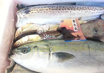 【鮮魚通販】お試し購入『詰合せセット』おすすめ5選と楽しみ方 - よちよちエクスプレス