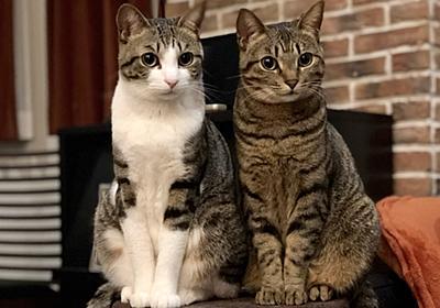 腎臓の働きを改善する遺伝子「AIM」でネコの寿命が2倍に!?   広報誌「淡青」37号より   東京大学