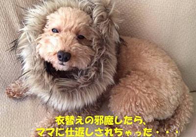 ナナちゃん、ライオンになる!? - NANA`S ROOM
