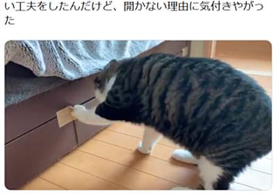 人間vs無駄に賢い猫の攻防 引き出しが開かない理由を見破る | おたくま経済新聞