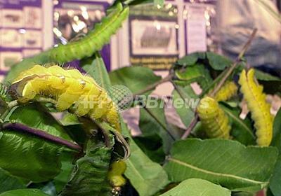 絹タンパク質で電子書籍の速度向上、台湾科学者 写真1枚 国際ニュース:AFPBB News