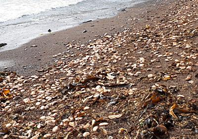 赤潮、過去最大167億円被害か ウニやサケ大量死 北海道発表 | 毎日新聞