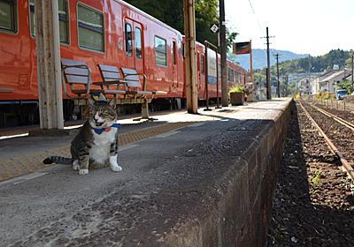 西日本豪雨:猫駅長「りょうま」駅再開と乗客を待ち続ける - 毎日新聞