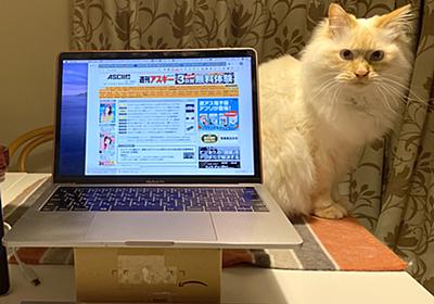 ASCII.jp:ネコと在宅ワークを両立する方法