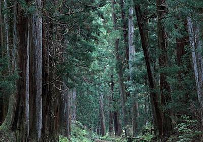 ギネスブックも認める世界一の杉並木「日光杉並木街道」を歩いて東照宮へ! | 栃木県 | LINEトラベルjp 旅行ガイド