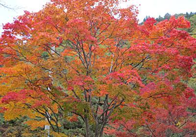 秋の思い出:福島県南会津郡下郷町大内宿 - Random Life Blog