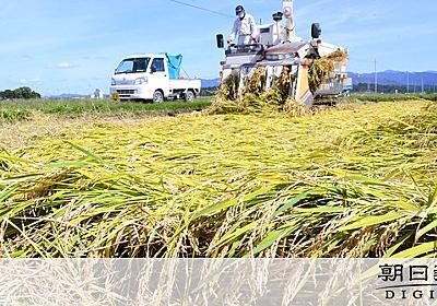 なぜか一面倒れた稲ばかり 全国屈指の米どころに異変:朝日新聞デジタル