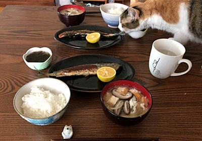 「猫=魚が好き」なのは日本だけ? - ねとらぼ
