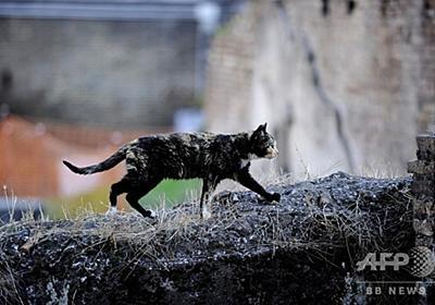 ネコにかまれ狂犬病に、英国人男性が死亡 写真1枚 国際ニュース:AFPBB News