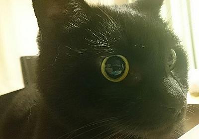 大ピンチ。融資が受けられない…! −黒猫大家奮闘記 #2 - にゃんこマガジン