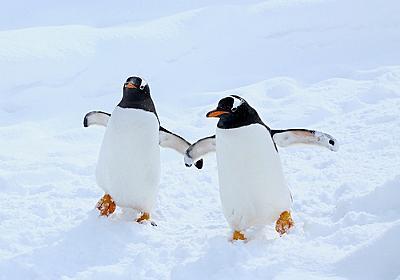 ペンギンに「宇宙人の可能性」が浮上 糞から金星にある化学物質 - ライブドアニュース