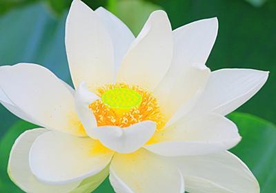 蓮池の風景⑥(鎌倉・鶴岡八幡宮から海蔵寺へ) - mhkj2's blog