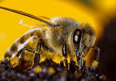 ミツバチは「ゼロ」の概念を理解できると判明 - GIGAZINE