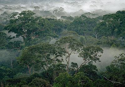 シロアリに「森を守る保険」の役割、実験で解明 | ナショナルジオグラフィック日本版サイト