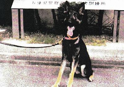 行方不明者捜索中に「逃走」の警察犬クレバ 兵庫県警捜査員が無事保護 - 毎日新聞