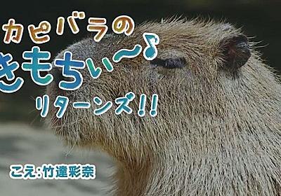 「ふんごぁっ!」「血流がながれるぅ~~」竹達彩奈さんがお風呂カピバラ動画に参戦 一方大塚明夫さんはマレーバクに - ねとらぼ