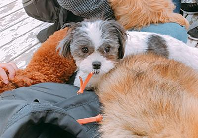 豊島園の犬ふれあいコーナーがやばすぎて泣くレベルだった | SPOT