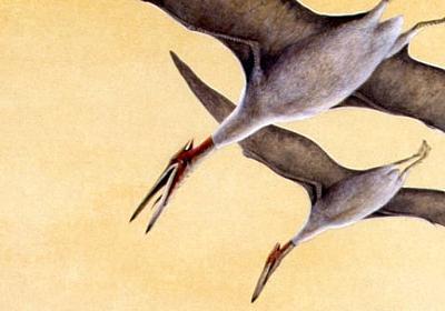 歯が消え、尾が短くなった「彼ら」の進化を証明した夭折博士の執念(安田 峰俊) | ブルーバックス | 講談社(1/3)